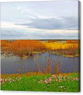 Marsh Spring Canvas Print