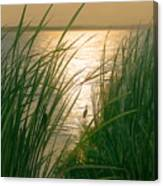Marsh Sunset Canvas Print