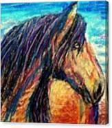 Marsh Tacky Wild Horse Canvas Print