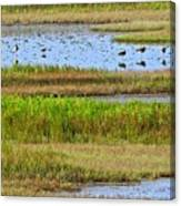 Marsh Tide Pool Canvas Print