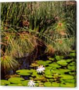 Marsh Waterlilies  Canvas Print