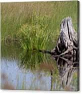 Marshland Reflections II Canvas Print
