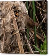 Marshy Nest Canvas Print