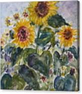 Martha's Sunflowers Canvas Print