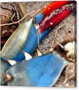 Maryland Blue Claw Canvas Print