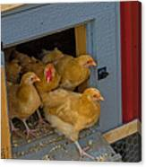 Aunt Mary's Chickens Canvas Print