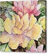 Ma's Roses 1 Canvas Print