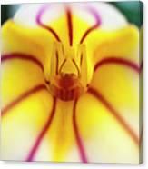 Masdevallia Orchid Canvas Print