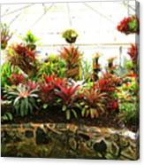 Massed Bromeliad In Hothouse Canvas Print