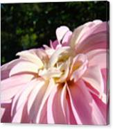 Master Gardener Pink Dahlia Flower Garden Art Prints Canvas Baslee Troutman Canvas Print