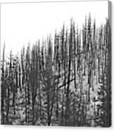 Matchsticks Canvas Print