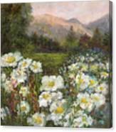 Matilija Poppies Canvas Print