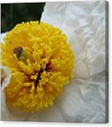 Matilija Poppy Canvas Print