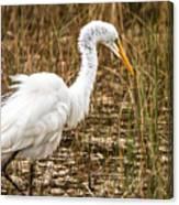 Mating Season - Everglades Canvas Print
