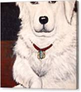 Matisse- Portrait Of A Hungarian Kuvasz Canvas Print
