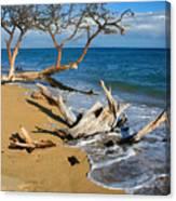 Maui Beach Dirftwood Fine Art Photography Print Canvas Print