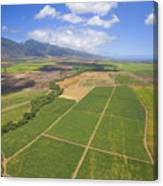 Maui Farmland Canvas Print