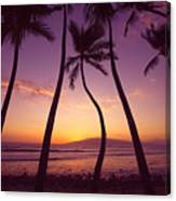 Maui Palms Canvas Print