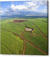 Maui Sugar Cane Canvas Print