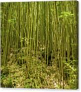 Maui's Thick Bamboo Canvas Print