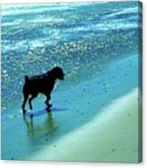 Maxwell On The Beach Canvas Print