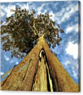 Mayflies On The Eucalyptus Viminalis Canvas Print