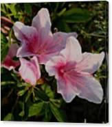 Maymont Flowers Canvas Print