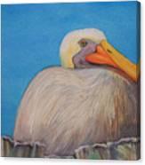 Mayport Florida Pelican Canvas Print