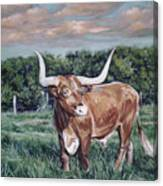 Mays Longhorn Canvas Print