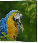 Mccaw Canvas Print