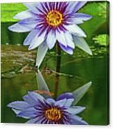 Mckee Waterlily II Canvas Print