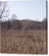 Meadow At Arnold Arboretum Canvas Print