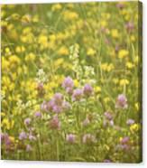 Meadow Dreams... Canvas Print