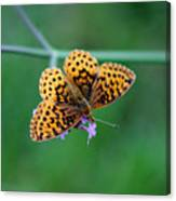 Meadow Fritillary Butterfly 2015 Canvas Print