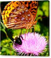 Meadow Fritillary On Thistle Blossom Canvas Print