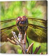 Meadow Hawk Dragonfly 2 Canvas Print
