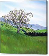 Meadow In Early March Canvas Print