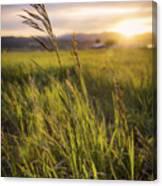 Meadow Light Canvas Print