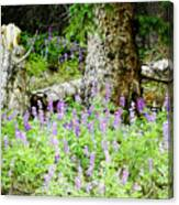 Meadow Lupine Canvas Print