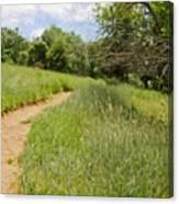Meadow Path Canvas Print