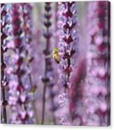 Meadow Sage Canvas Print