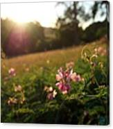 Meadow Sunset Canvas Print