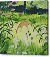 Meadow Surprise Canvas Print