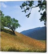 Meadow View Summer Canvas Print