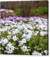 Meadow With Flowers At Botanic Garden In The Blue Mountains Canvas Print