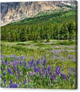Meadow With Lupines Canvas Print
