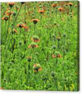 Meadow With Orange Wildflowers Canvas Print