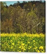 Golden Hay  Canvas Print
