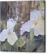 Meaghan's Trillium Canvas Print