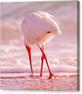 Meandering Beauty Cortez Beach Canvas Print